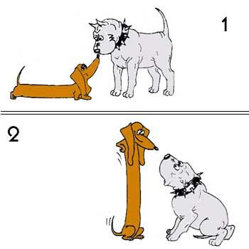 Taksa Dog